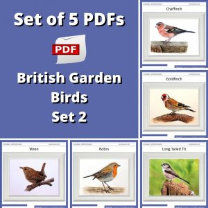 Set of 5 PDF watercolor tutorials on painting British garden birds