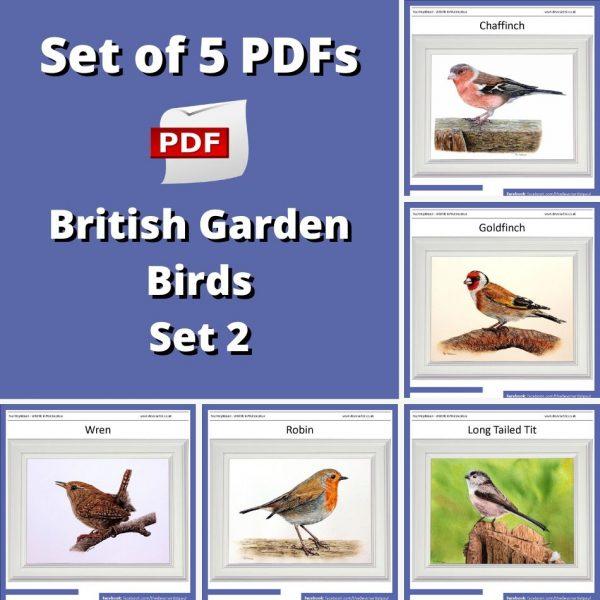 Set of 5 PDF watercolor tutorials on painting British garden birds