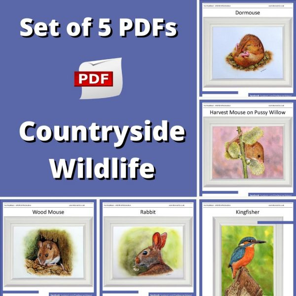 Set-of-5-PDF-watercolour-tutorials-on-painting-countryside-wildlife