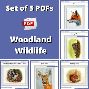 Set of 5 PDF watercolour tutorials on painting woodland wildlife