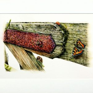 Butterfly and ladybug painted in watercolor by Paul Hopkinson
