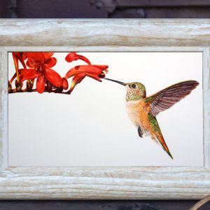 Watercolour painting of a Hummingbird by Paul Hopkinson in a rustic frame