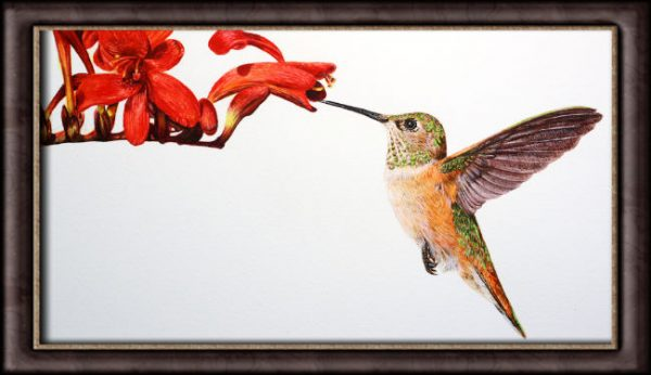 Watercolour painting of a Hummingbird by Paul Hopkinson photographed in a frame