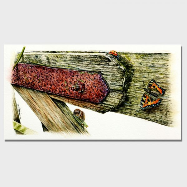 Watercolour painting of an old wooden gate with insects by Paul Hopkinson