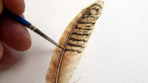 Work in progress photos of painting a feather in watercolor (3)