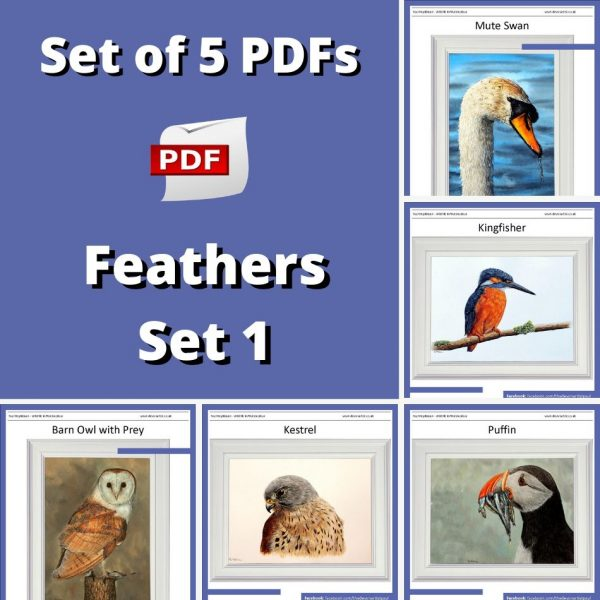 5 PDF watercolour tutorials on painting feathers by Paul Hopkinson