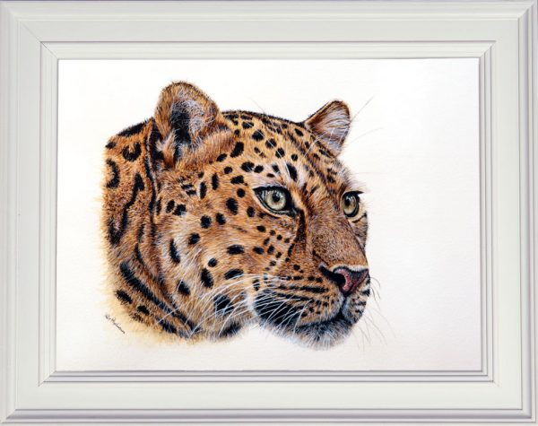 Leopard painted in watercolor by Paul Hopkinson in a white frame