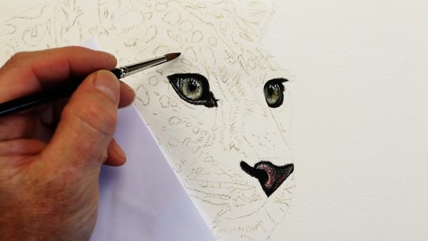 Panther watercolor painting stage 1