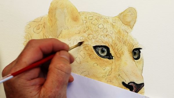 Leopard watercolour painting stage 2