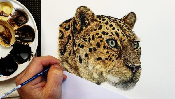Leopard watercolour painting stage 4