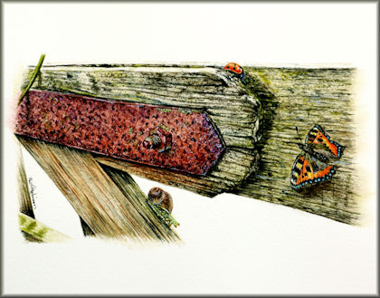 Old wooden gate and insects video tutorial for online school