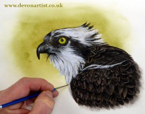 Original watercolor osprey painting by Paul Hopkinson