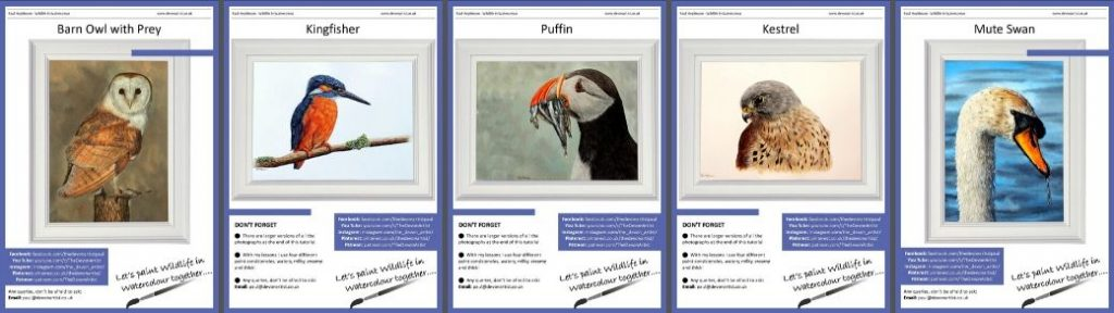 How to Paint Feathers - Watercolour Tutorials, 5 PDFs Featuring 5 Different Birds