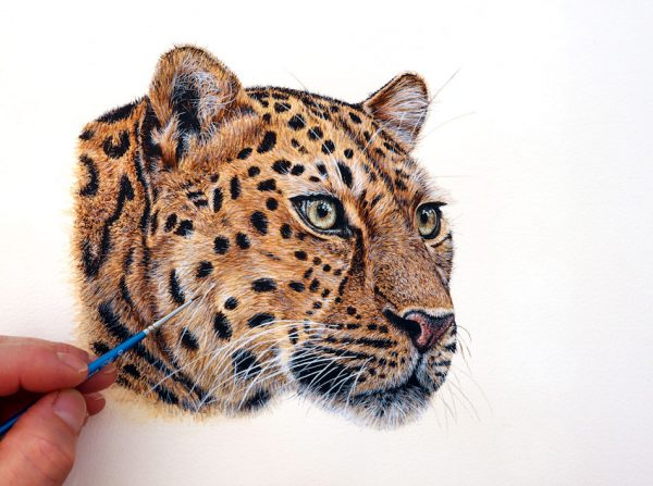 Paul Hopkinson painting a panther in realistic watercolor