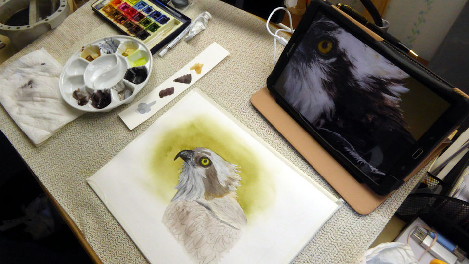 How I painted a realistic osprey in watercolor, this was my desk