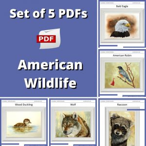 Set of 5 PDF watercolour tutorials on painting American wildlife