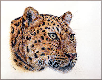 Watercolour video tutorial on painting a realistic leopard button link