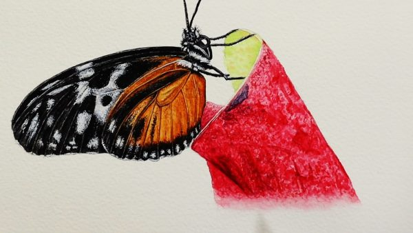 The final stage of painting a realistic butterfly in watercolour