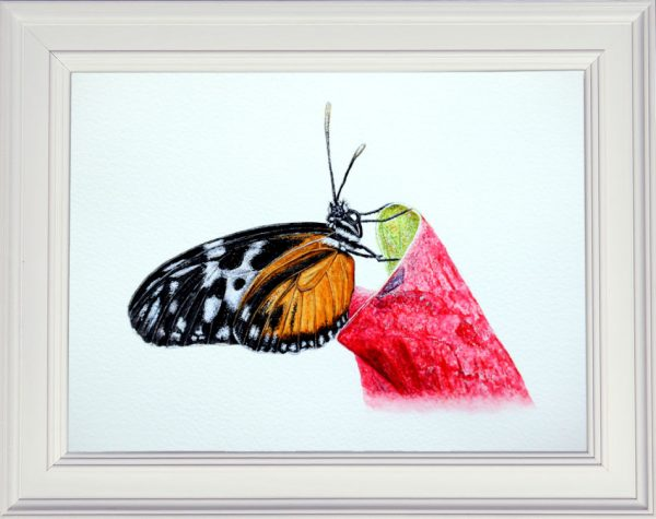 Butterfly watercolor painting displayed in a frame