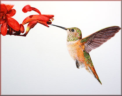 Button link to video tutorial on painting a hummingbird in watercolor