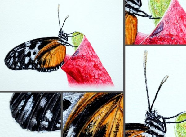 Close up photos of a butterfly watercolor painting by Paul Hopkinson