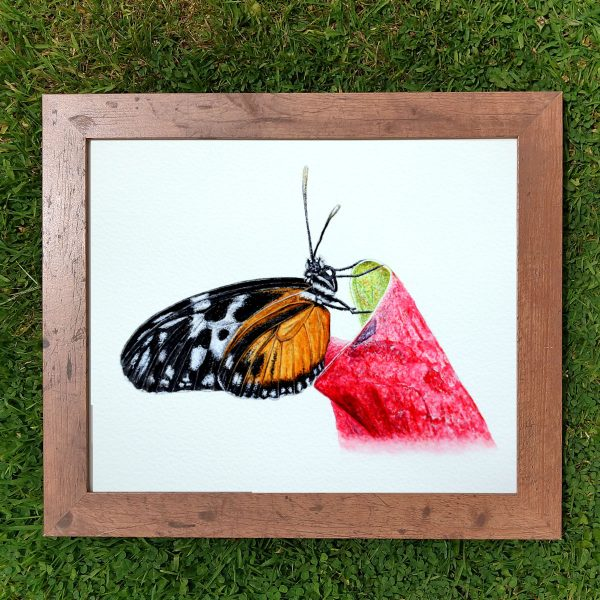 Framed realistic watercolor butterfly painting by Paul Hopkinson