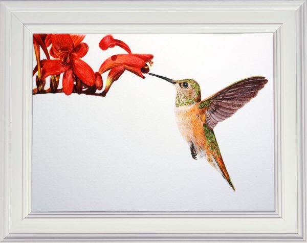 Hummingbird in a white frame