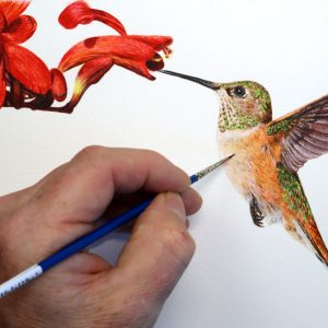 Paul Hopkinson painting a Hummingbird in watercolor