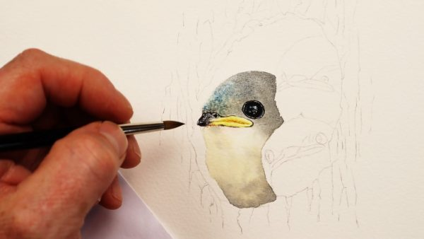 Paul Hopkinson painting swallows in watercolor - stage 1