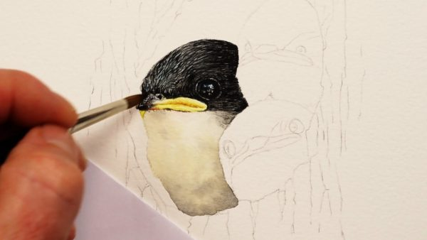 Paul Hopkinson painting swallows in watercolor - stage 2