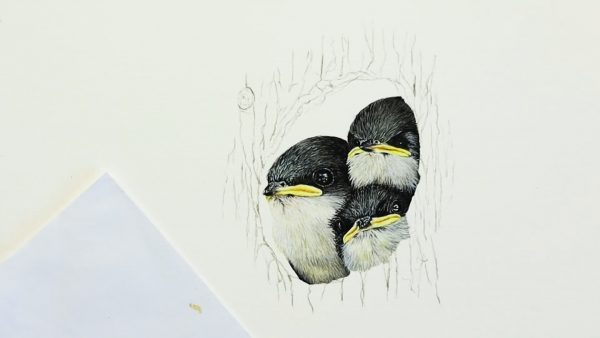 Paul Hopkinson painting swallows in watercolor - stage 3