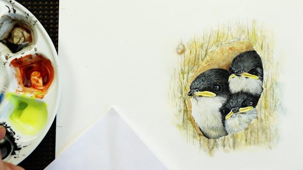 Paul Hopkinson painting swallows in watercolor - stage 4