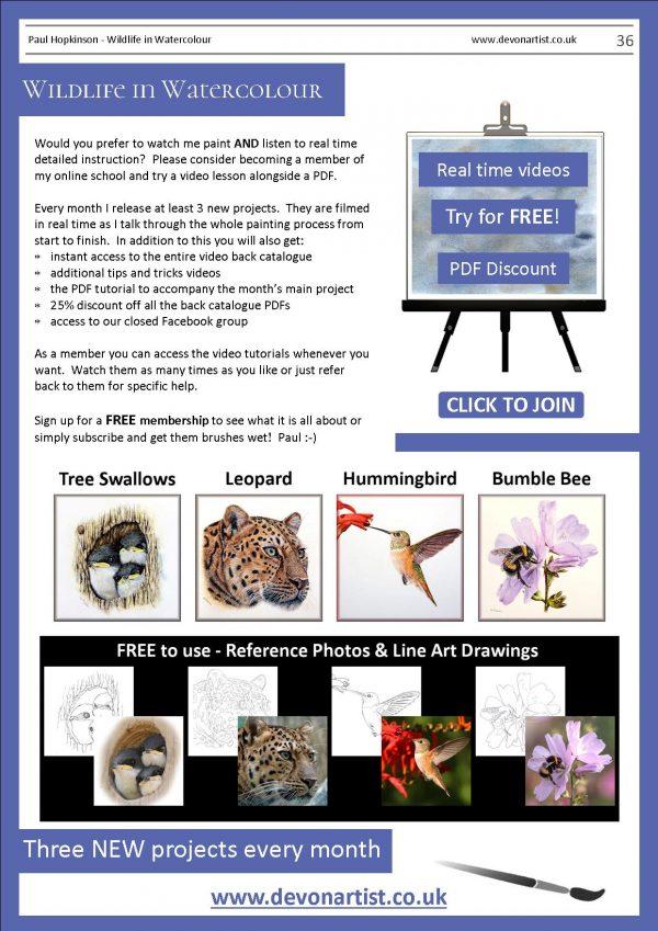 The Devon Artist watercolour wildlife PDF tutorials