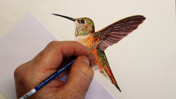Tutorial-on-painting-a-hummingbird-in-watercolor-part-3