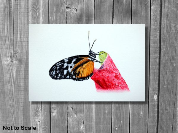 Watercolor painting of a butterfly by Paul Hopkinson on a wall