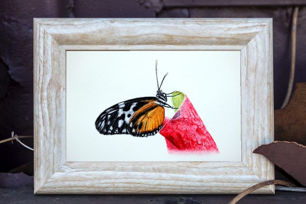 Watercolour painting of a Golden Helicon butterfly by Paul Hopkinson framed