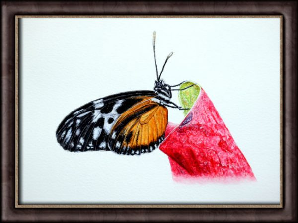 Watercolour painting of a butterfly by Paul Hopkinson framed