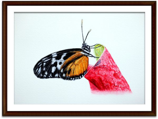 Watercolour painting of a butterfly by Paul Hopkinson mounted and framed