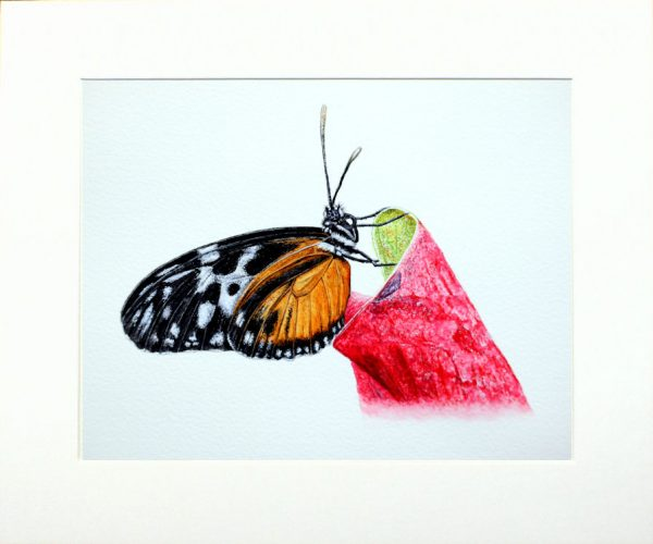 Watercolour painting of a butterfly by Paul Hopkinson in a neutral mount