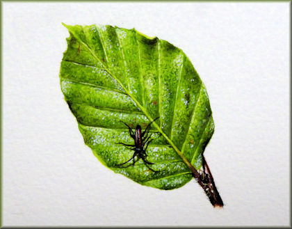 Watercolour painting of a summer beech leaf video tutorial button link
