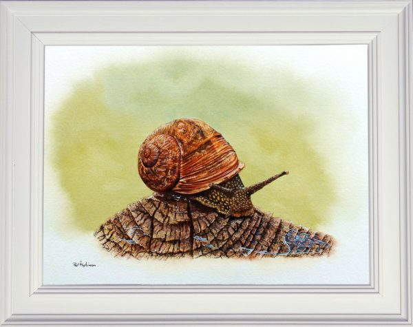 Garden snail watercolor painting framed