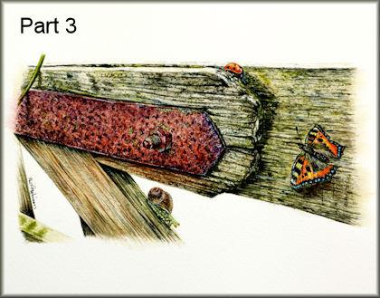 Miniature watercolour wildlife painting tutorial