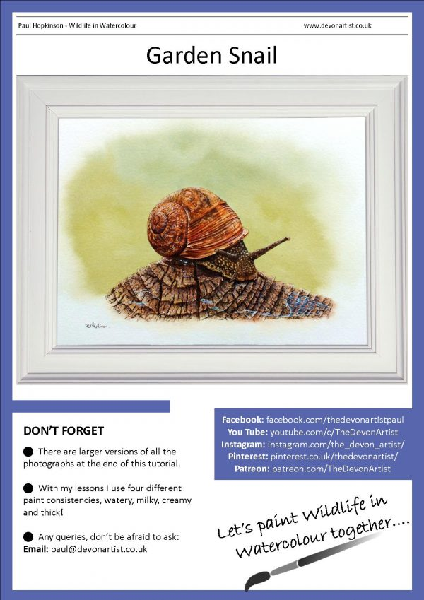 PDF watercolour tutorial realistic snail