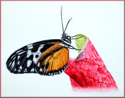 Video tutorial on painting a butterfly in watercolor, button link