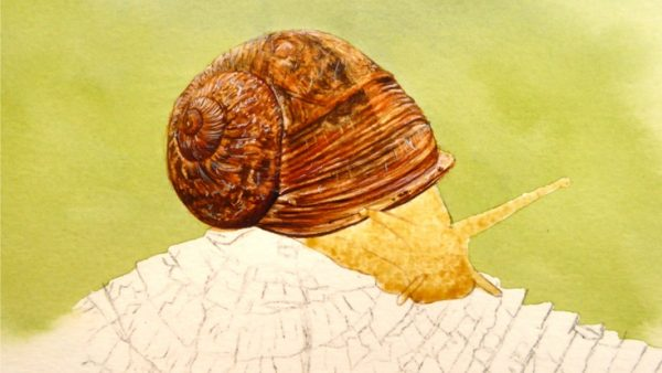 Watercolor snail painting stage 3