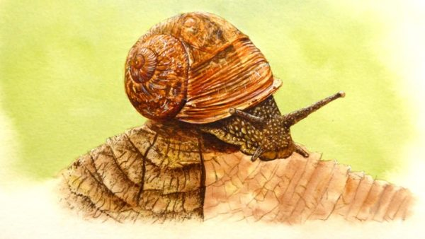 Watercolor snail painting stage 4