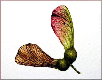 Button link botanical watercolour video tutorial