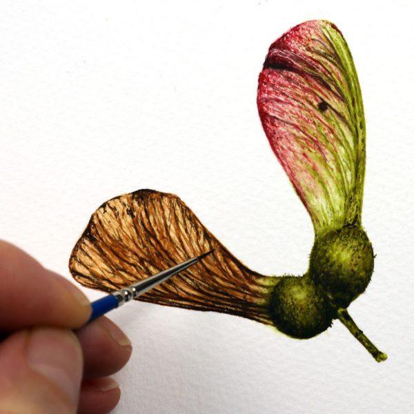 Original botanical watercolor painting