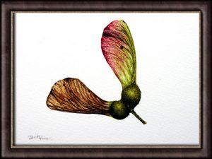 Sycamore Seed Botanical Illustration - Original, Fine Art Detail