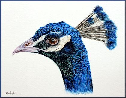 Watercolour video tutorial peacock painting